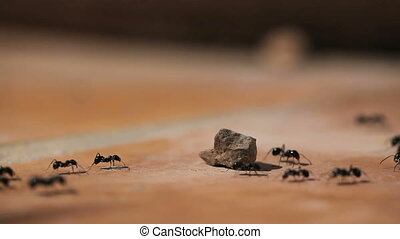 Ants running on stone ground
