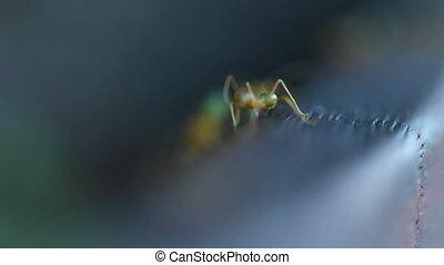 Ants walking on a wood