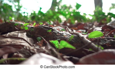Ants with leafs walking in super slow-motion