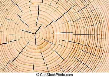 anual, árvore, textura, anéis, closeup, multa