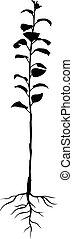 anual, seedling, maçã, árvores, com, raizes