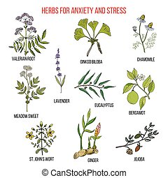 Anxiety treatment herbs collection
