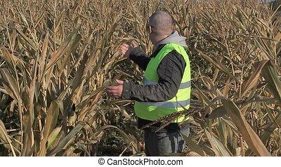 Anxious farmer on cold corn field in autumn