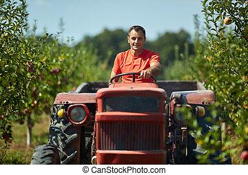 anziano, suo, guida, trattore, contadino