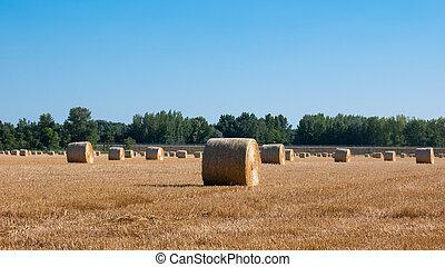 após, colher, palha, rural., pilhas, trigo, colheitas, campo...