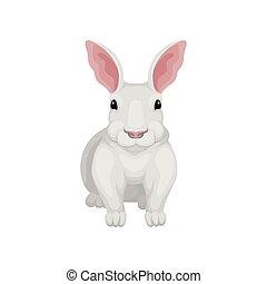 apartamento, creature., hare., doméstico, frente, tema, vetorial, vista., selvagem, pequeno, fauna, coelho, branca, ícone