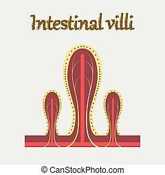 apartamento, estilo, órgão, villi, human, intestinal, ícone