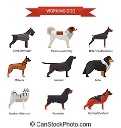 apartamento, estilo, jogo, ícones, isolado, ilustração, cão, experiência., emblemas, vetorial, branca, raças, design.