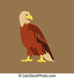 apartamento, estilo, vetorial, ilustração, águia