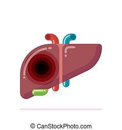 apartamento, human, desenho, fígado, ilustração