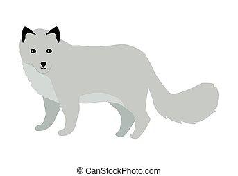 apartamento, raposa polar, ilustração, vetorial, desenho