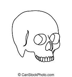 apartamento, silueta, cranio, human, ícone, vista lateral