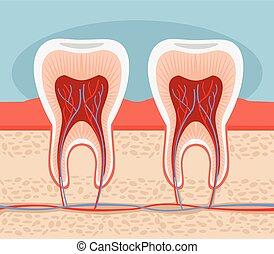 apartamento, vetorial, tooth., ilustração