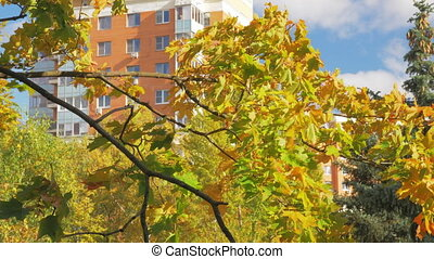 Apartment house and maple tree in autumn - Autumn in the...