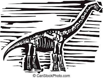 apatosaurus, fósil