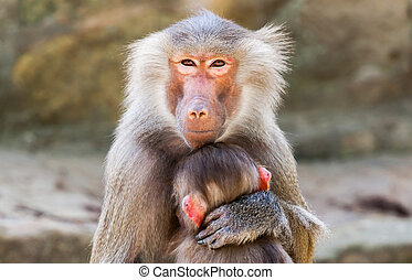 ape mother with her child in arms