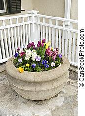 apedree plantador, con, flores del resorte