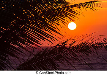 apelsin, solnedgång