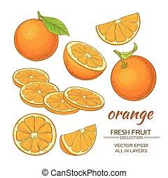 apelsin, vektor, sätta