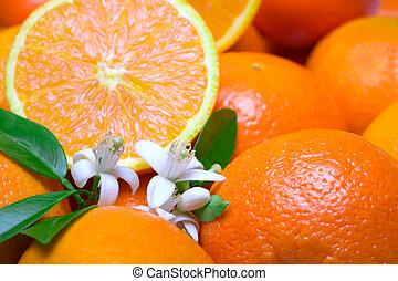 apelsiner, med, det leafs, och, blomma, in, a, vit fond