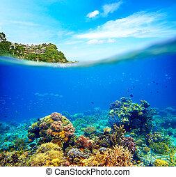 apenas, peixe, cena, alto, através, water., preencher, submarinas, uso, espaço, res, céu, tu, brilhar, coloridos, boracay., ensolarado, standalone., recife, ilha, coral, oceânicos, limpo, ou