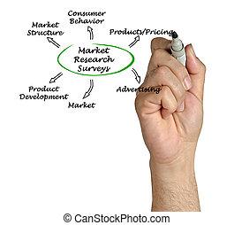 aperçus, étude de marché