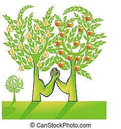 apfel, und, birnenbaum