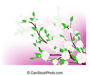 apfelbaum, fruehjahr, blüte