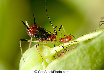 aphid with nice background color