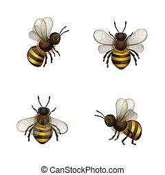 api, bianco, set, isolato