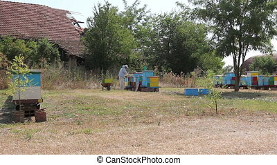 Apiarist, beekeeper is harvesting honey, vintage - Beekeeper...