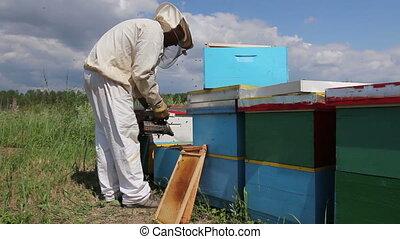 Apiarist, beekeeper working in apiary - Beekeeper is...