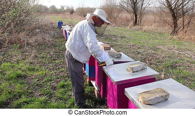 Apiarist is doing spring control situation in bee colony -...