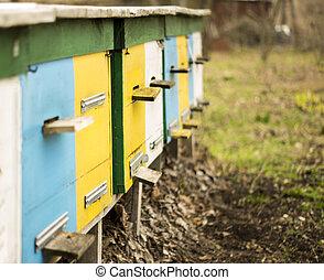 apiary;