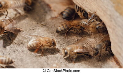 Apiary. Bees working, bring floral nectar and pollen to...
