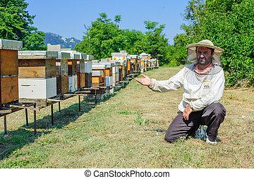 apicoltore, apiario