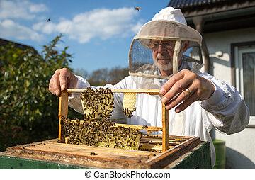 apicoltore, curare, ape, colonia