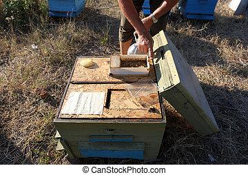 apiculteur, abeilles, inspection
