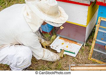 apiculteur, est, vérification, recueilli, coloré, pollen abeille, blanc, plastique, cocotte