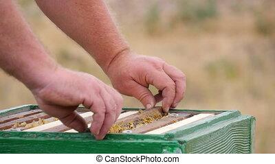 apiculteur, récupérations directes, ruche, miel, cadre, dehors