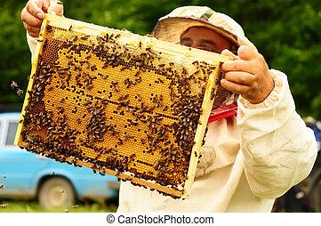 apiculteur 37