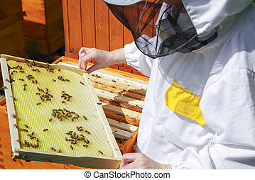 Apiculture - bees in beehive - Apiculture - a lot of bees in...