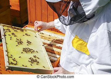 apiculture, colmena, abejas, -