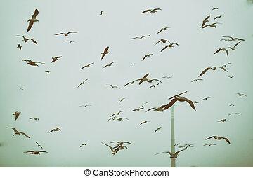 apocalíptico, cena, de, pássaros voando, sobre, a, entulho