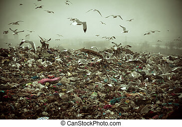 Apocalyptic scene of birds flying over the dump