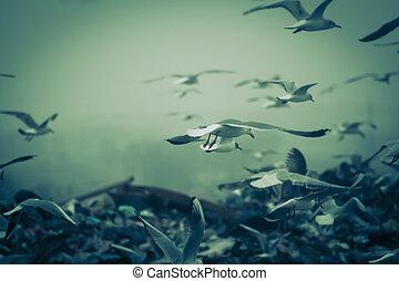 apocalyptisch, stortplaats, op, vliegen, scène, vogels