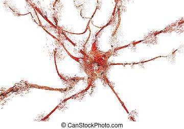 apoptosis, de, neurona, cuál, es, observado, en, diferente, enfermedades