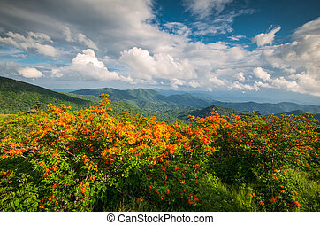 Appalachian Trail Flame Azalea Flowers Spring Mountains Scenic Landscape Photography