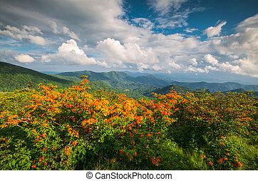 Appalachian Trail Flame Azalea Flowers Spring Mountains Scenic Landscape Photography