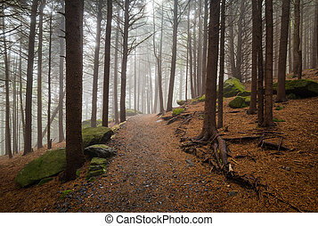 Appalachian Trail North Carolina Outdoors Forest Hiking Roan...